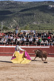 Bullfighter Alberto Lamelas bullfighting knees with your right hand gives a pass with the muleta in a very complicated position in Stock Photos