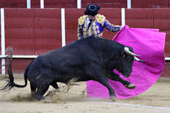 Bullfighter. In the bullring, the bull fighting Royalty Free Stock Photo