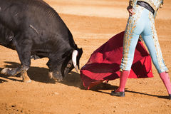Bullfighter with the Cape in the Bullfight Stock Image