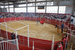 Bullfighter exhibition indoors Royalty Free Stock Images