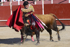 Bullfighter. Picture of a bullfighter, doing their job in the bullring Stock Photo