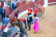 A bullfighter rewards Stock Photography
