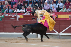 The bullfighter spanish Curro Diaz being caught by the bull Royalty Free Stock Photos