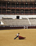 Bullfighter in training Stock Photo