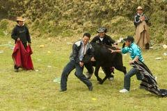 bullfighting Zdjęcie Stock