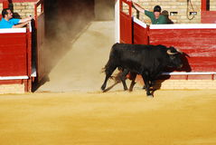 The bullfighting area in Huelva Royalty Free Stock Images
