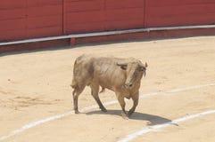 Bullfighting, Corrida de Toros Stock Images