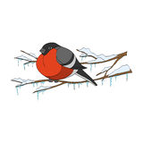 Bullfinch στο χειμερινό κλάδο επίσης corel σύρετε το διάνυσμα απεικόνισης Στοκ φωτογραφία με δικαίωμα ελεύθερης χρήσης