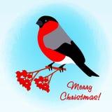 Bullfinch на ветви рябины звезды абстрактной картины конструкции украшения рождества предпосылки темной красные белые Стоковая Фотография RF