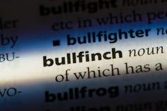 bullfinch Στοκ φωτογραφία με δικαίωμα ελεύθερης χρήσης