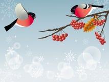 Bullfinch. Bullfinch on the branch. Vector illustration Royalty Free Stock Photos