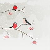 Bullfinch. Illustration with three bullfinches and rowan Stock Photography