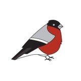 bullfinch ilustración del vector