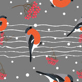 Bullfinch and berberry branch seamless pattern. Vector background Stock Photo