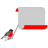 A bullfinch with a big blank paper for congratulat Royalty Free Stock Images