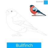 Bullfinch bird learn to draw vector Stock Image