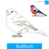 Bullfinch bird learn to draw vector Stock Images