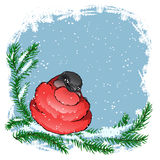 Bullfinch bird sitting on a spruce branch in the snow Royalty Free Stock Image
