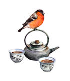 Bullfinch bird and tea set. Watercolor Royalty Free Stock Images