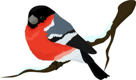 Bullfinch bird winter illustration Royalty Free Stock Images