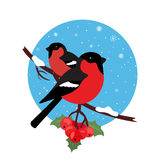 Bullfinch are bird winter. Illustration vector in modern flat design. Round icon. Royalty Free Stock Images