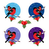 Bullfinch are bird winter. Round web icon. Illustration vector in modern flat design. Stock Photography