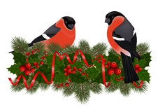 Bullfinch birds on fir tree branches. Illustration of bullfinch birds on fir tree, holly berry branches with streamers isolated Stock Photography