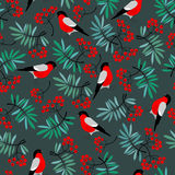 Bullfinch birds seamless pattern with Mountain ash leaves and berries Royalty Free Stock Images