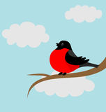 A bullfinch on the branch Stock Photo