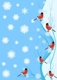 Bullfinch on the branch. Winter birds on a branch against a background of falling snowflakes vector illustration