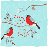 Bullfinch on the branch. Winter illustration royalty free illustration