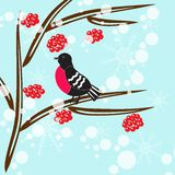 Bullfinch branch. Bird sitting on a branch, snow falls stock illustration