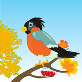 Bullfinch on branch. Beautiful bird bullfinch on branch tree by autumn stock illustration