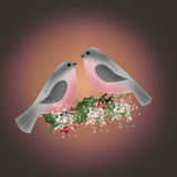 Bullfinch on branch of holly greetig christmas card. Background royalty free illustration