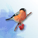 Bullfinch on the branch of red rowan. Realistic style stock illustration