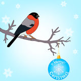 Bullfinch on the branch. Bullfinch sitting on a branch decorated with Christmas ball vector illustration