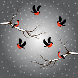 Bullfinch on branch, snow, merry christmas, gray background. Winter vector illustration. Bullfinch on branch, snow, merry christmas, gray background. Winter vector illustration