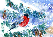 Bullfinch on the branch of spruce. Greeting card with snowflakes and bird.Winter postcard.Watercolor hand drawn illustration stock illustration