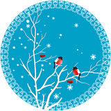 Bullfinch on a branch. On winter illustration shows rowan branch with berries on which sit bullfinches. Illustration executed in a decorative round frame on stock illustration