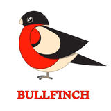 Bullfinch Colorful Geometric Icon Stock Photo