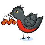 Bullfinch con el serbal libre illustration