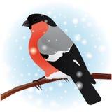 bullfinch De de wintervogel Royalty-vrije Stock Afbeeldingen