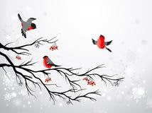 Bullfinch degli uccelli e della filiale Fotografie Stock Libere da Diritti