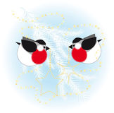 Bullfinch dress up a Christmas tree Royalty Free Stock Images