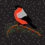 Bullfinch on the fir branch, snowfall. Winter or christmas vector illustration Royalty Free Stock Photography