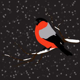Bullfinch on the fir branch, snowfall. Winter or christmas vector illustration Stock Image