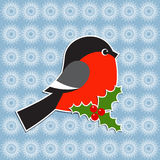 Bullfinch and Holly berry Stock Photography