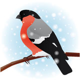 bullfinch L'uccello di inverno Immagini Stock Libere da Diritti