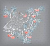 Bullfinch and mountain ash background Stock Photos