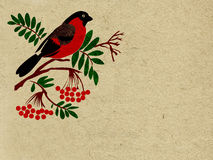 Bullfinch rojo libre illustration